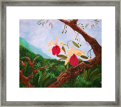Happy Orchids Framed Print by Alanna Hug-McAnnally