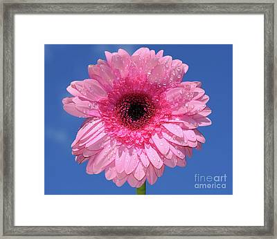 Happy Pink Gerbera By Kaye Menner Framed Print