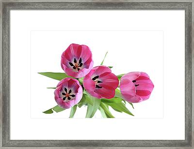 Framed Print featuring the photograph Happy Pink by Marie Leslie