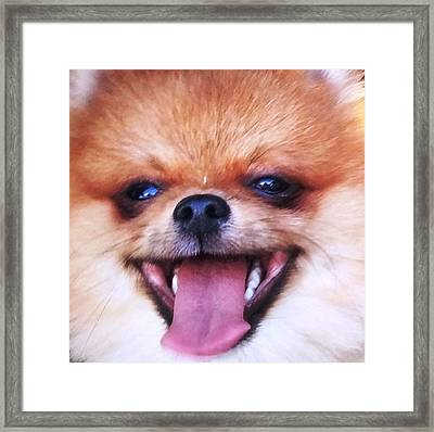 Happy Pom Framed Print by Teresa Ruiz