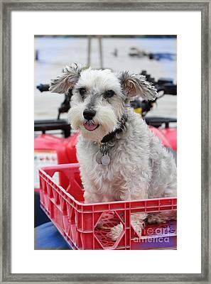 Happy - Puppy Mania Photograph Framed Print by Ella Kaye Dickey