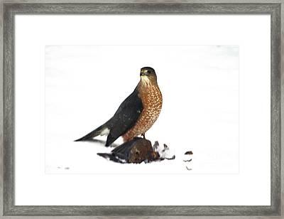 Happy Raptor Framed Print by Lloyd Alexander