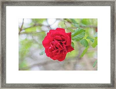 Framed Print featuring the photograph Happy Red Flower by Raphael Lopez