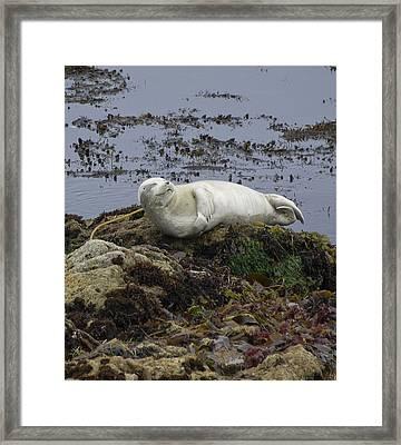 Happy Sea Lion Framed Print