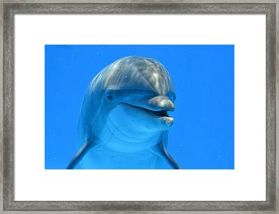 Happy Smiling Dolphin Framed Print