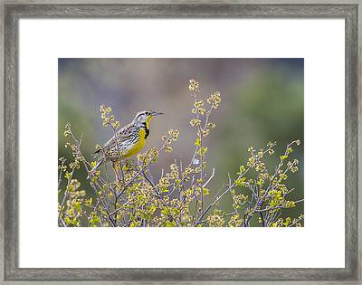 Happy Spring Framed Print by Verdon