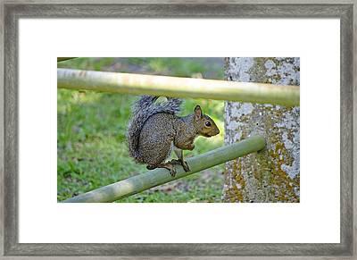 Happy Squirrel Framed Print