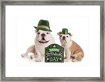 Happy St Patricks Day Pups Framed Print