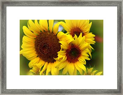 Framed Print featuring the photograph Happy Sunflowers by Kay Novy