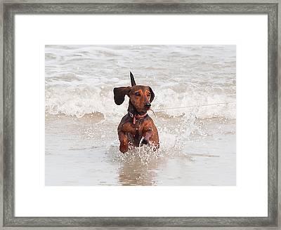 Happy Surf Dog Framed Print