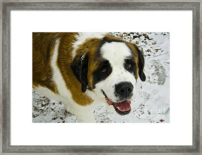 Happy Tank Framed Print