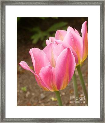 Happy Together Framed Print