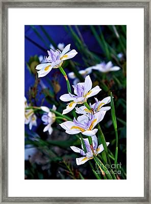 Happy Wild Iris Framed Print by Kaye Menner