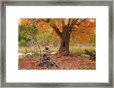 Lost Maples State Park Print, Happy's Maple Framed Print by Mike Brymer