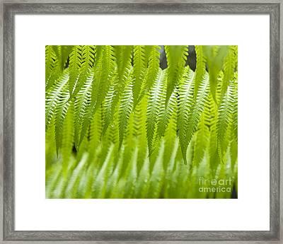 Hapu'u Fern Detail Framed Print