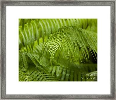 Hapu'u Tree Ferns Framed Print