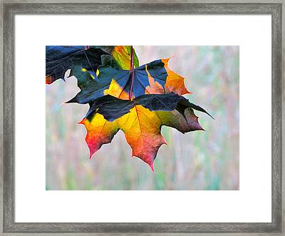 Harbinger Of Autumn Framed Print by Sean Griffin