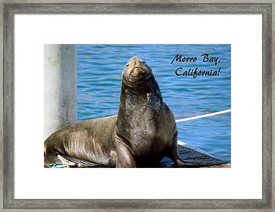 Harbor Seal Morro Bay California Framed Print