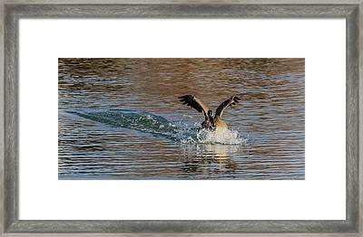 Framed Print featuring the photograph Hard Landing by Yeates Photography