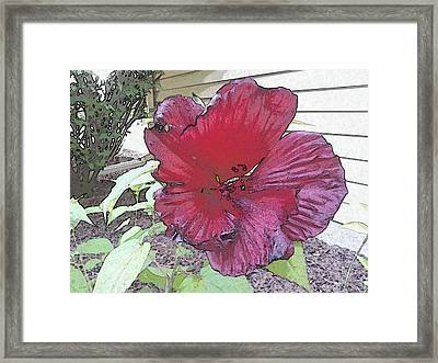 Hardy Hibiscus Framed Print
