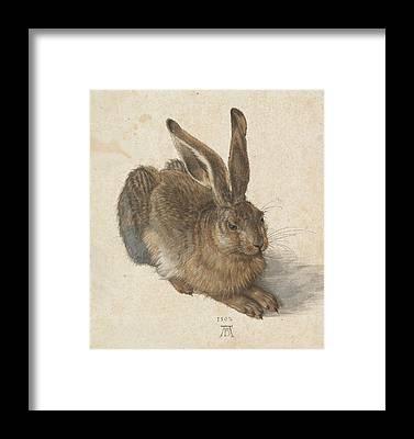 Brown Hare Framed Prints