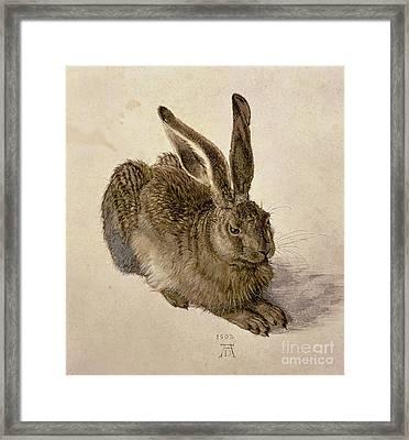 Hare Framed Print by Albrecht Durer