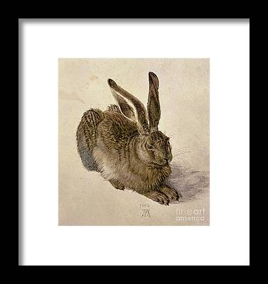 Hare Framed Prints
