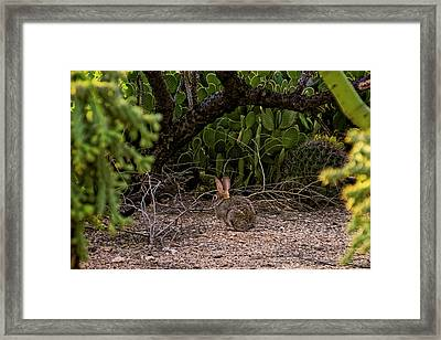 Framed Print featuring the photograph Hare Habitat H22 by Mark Myhaver