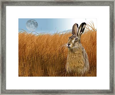 Hare In Grasslands Framed Print