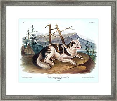 Hare Indian Dog Antique Print Audubon Quadrupeds Of North America Plate 132 Framed Print by Orchard Arts