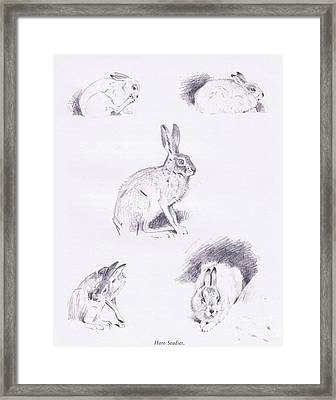 Hare Studies Framed Print by Archibald Thorburn
