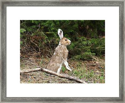 Hare That Framed Print