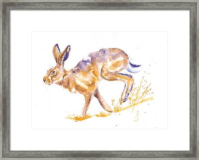 Harebrained Framed Print