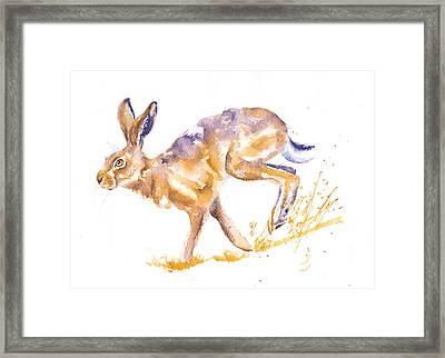 Harebrained Framed Print by Debra Hall