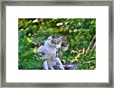 Framed Print featuring the photograph Harlequin Cat Twins by Chriss Pagani