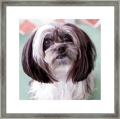 Framed Print featuring the photograph Harley by Cherie Duran