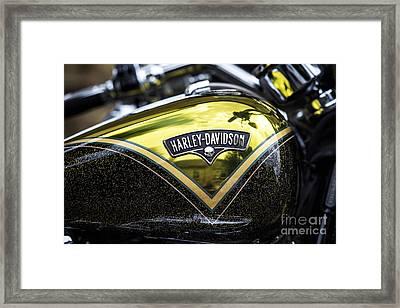 Harley Gold Framed Print by Tim Gainey