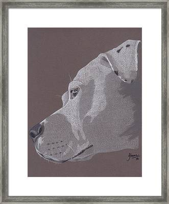 Harlo Framed Print by Stacey Jasmin