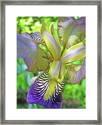 Harmony 4 Framed Print by Lynda Lehmann
