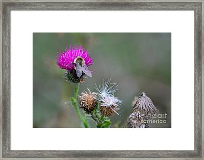 Harmony Framed Print by Cindy Manero