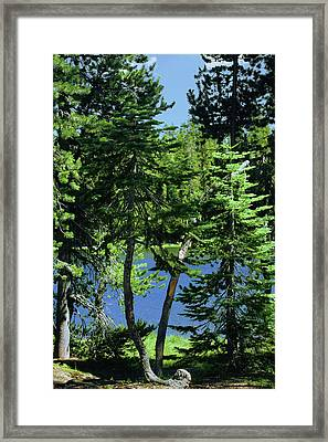 Harmony In Green And Blue - Manzanita Lake - Lassen Volcanic National Park Ca Framed Print