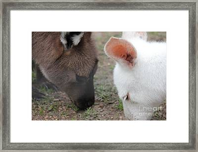 Harmony Framed Print by Roo Printz