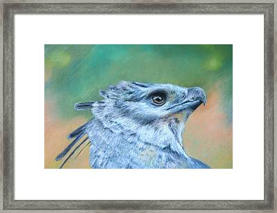 Harpy Eagle Two Framed Print