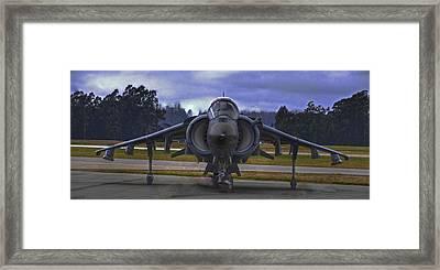 Harrier Framed Print by Paul Owen