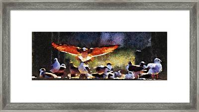 Harris Creek Gulls Framed Print