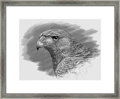 Harris Hawk Drawing Framed Print