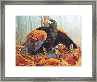 Harris Hawk  Framed Print by Ken Everett