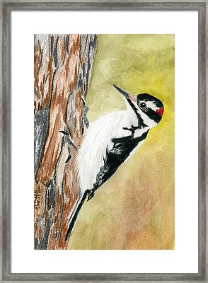 Harry The Hairy Woodpecker Framed Print