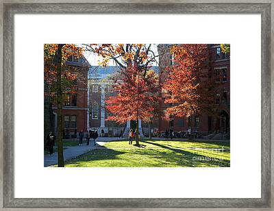Harvard Yard Lehman Hall In Fall Framed Print by Jannis Werner