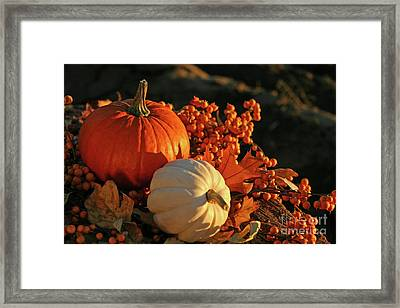 Harvest Colors Framed Print by Sandra Cunningham